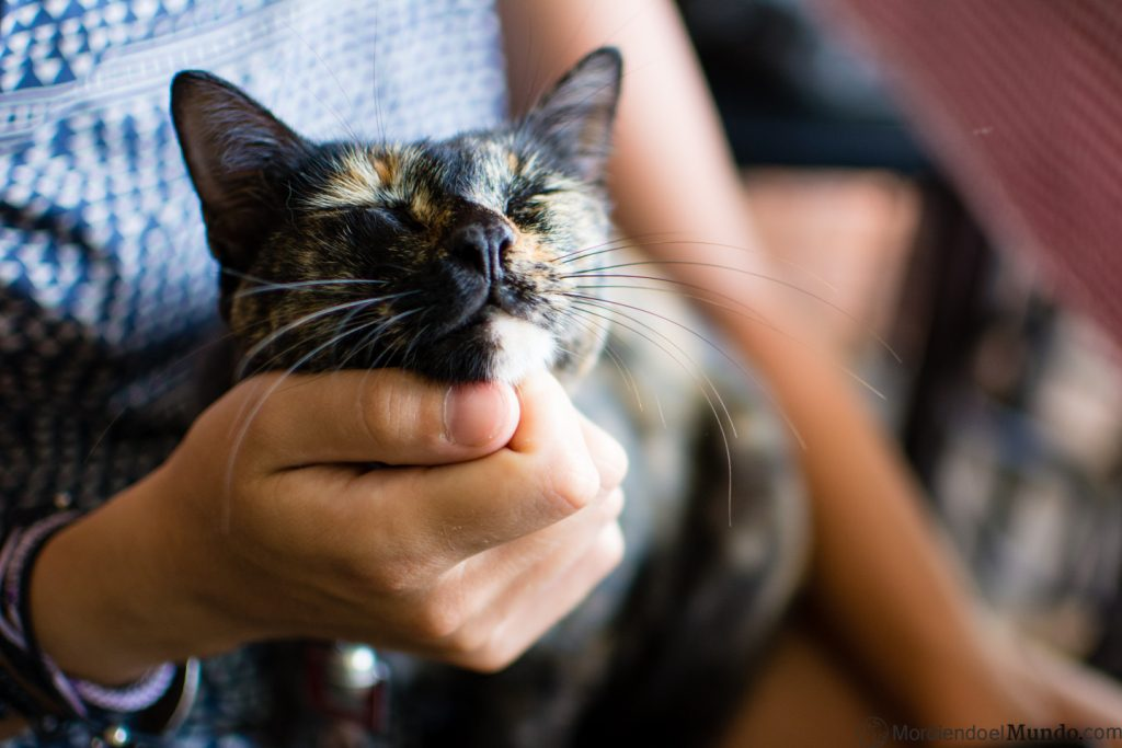 gatito feliz acariciándole el cuello